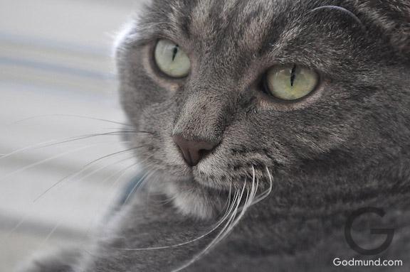 CAT's zoolander stare