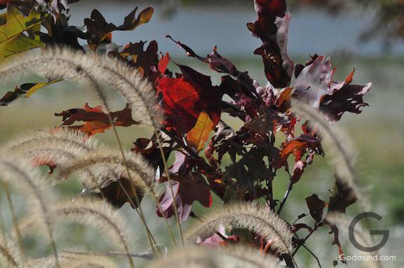 Fall In the Fields
