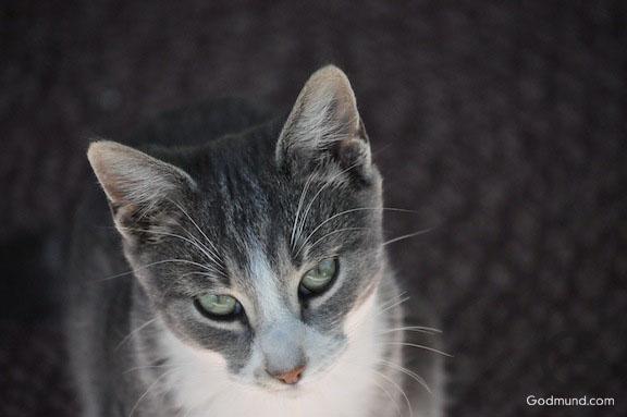 Slim. The Farm Cat