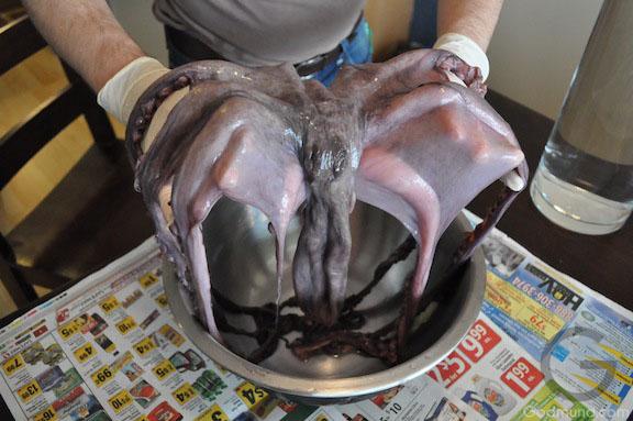 Octopus on display - Godmund