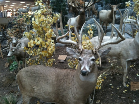 This buck is looking at you Cabela's Hamburg PA