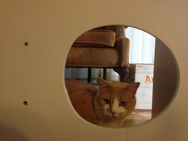 Rokit the Cat behind the seat Godmund_com